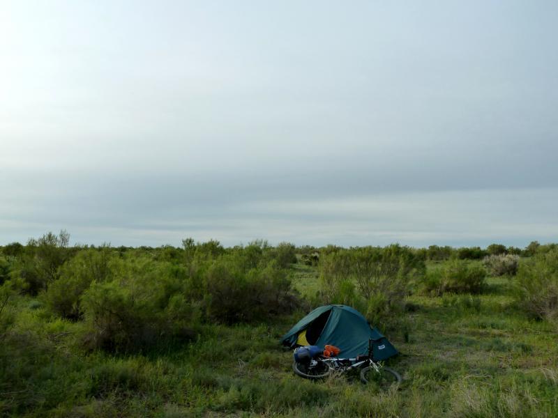 20130511. В тугайных зарослях северной части долины Чу.