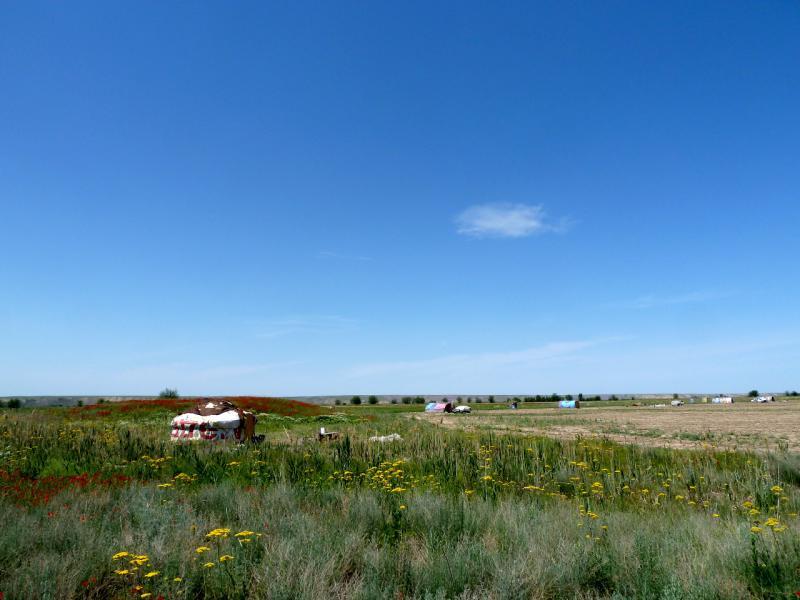 20130512. Юрты киргизов-дунган на полях в Чуйской долине.