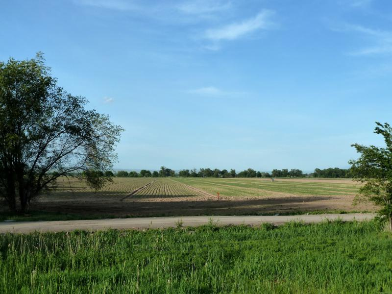 20130512. В южной части Чуйской долины (Кордайский район).