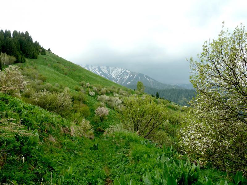 20130519. Тропами в горах Заилийского Алатау.