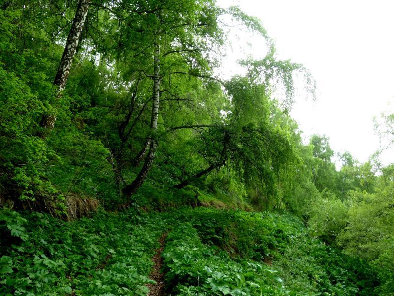 20130519. Тропа обрывом у долины реки Микушин-Сай.