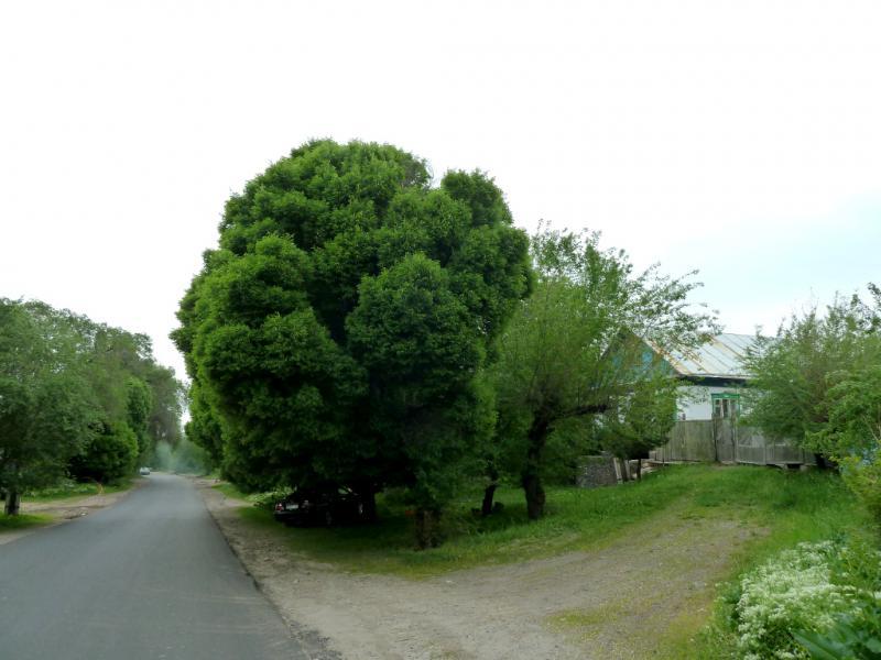 20130519. В посёлке Есик.