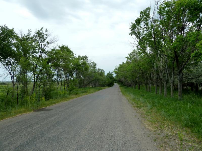 20130519. Дорога-аллея вдоль БАК, неподалеку от села Евгеньевка.
