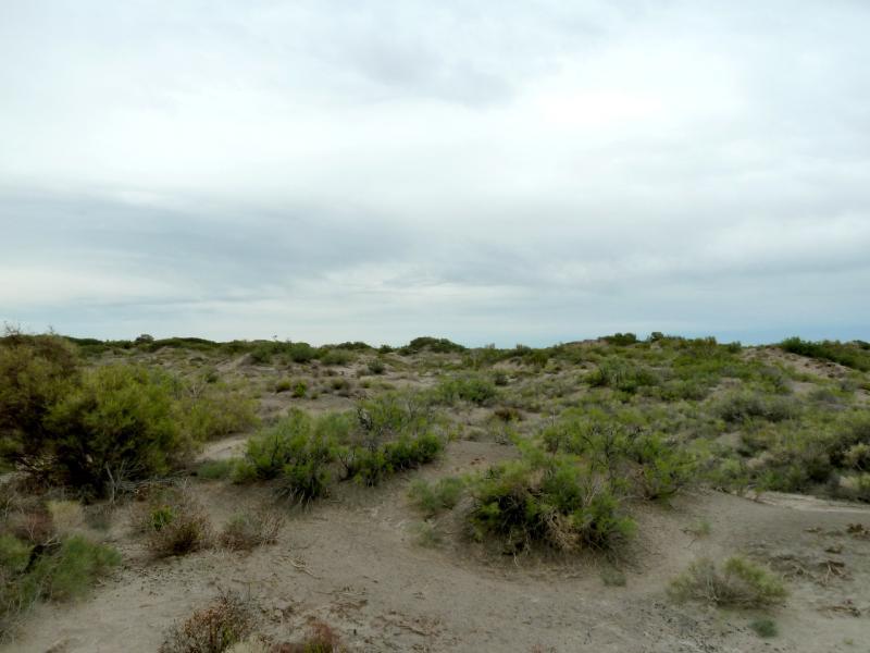 20130524. В полупустыне неподалеку от рек Чарын и Или.