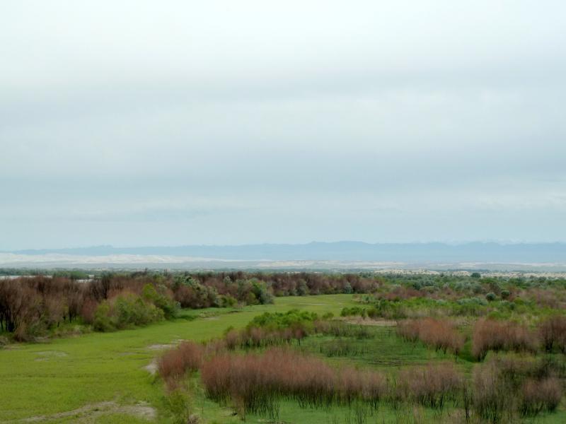 20130524. Вид с моста на прибрежные леса реки Или.
