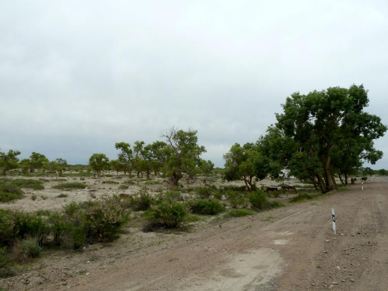 20130524. Запустенье на месте бывших населённых пунктов севернее реки Или.