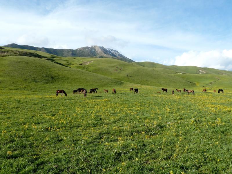 20130526. Лошадки на джайляу.