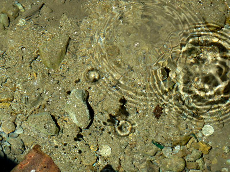 20130531. Раковина родника в Каражальских горах.