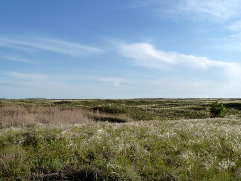 """20130601. Вид на """"пески бугристые"""", раскинувшиеся на двадцать километров левым берегом Бухтарминского водохранилища."""