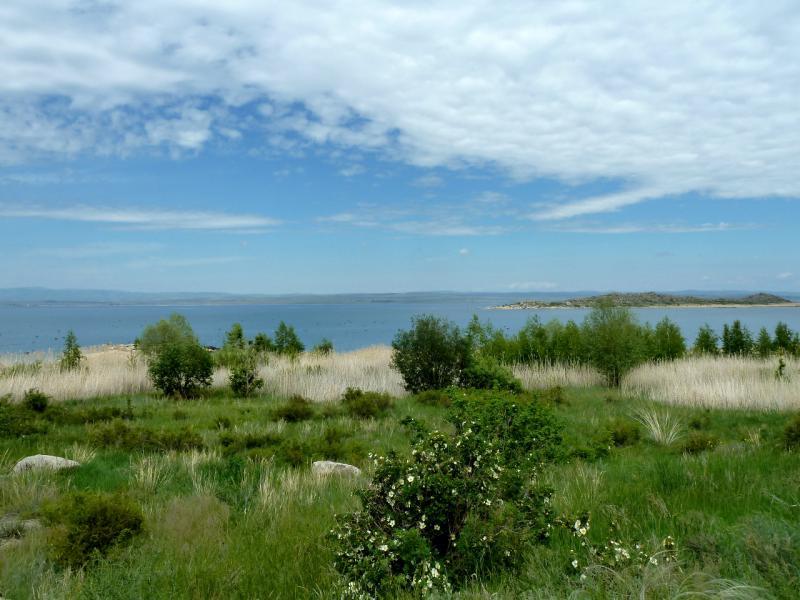 20130604. Заросший камышем правый берег водохранилища.