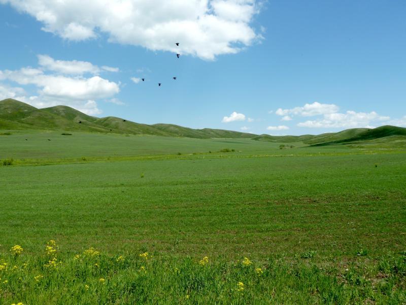 20130606. Плодородная долина между сопок.