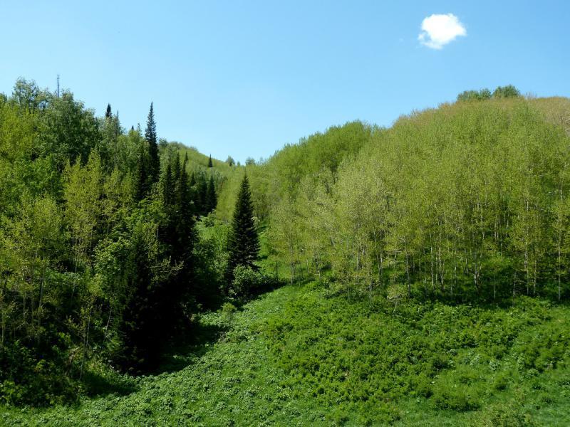 20130607. Поросшие сосной, берёзой и осиной склоны перевала Осиновский.