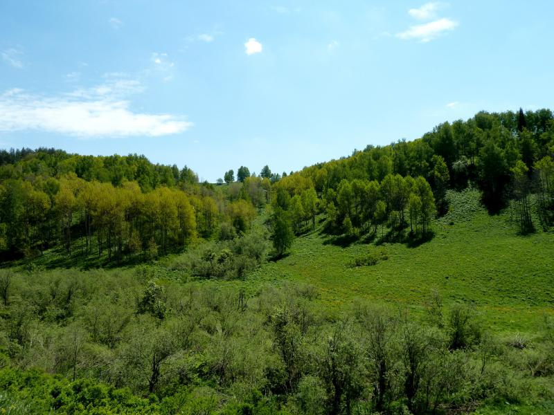 20130607. Типичная ложбина под перевалом, с ручьём на дне.