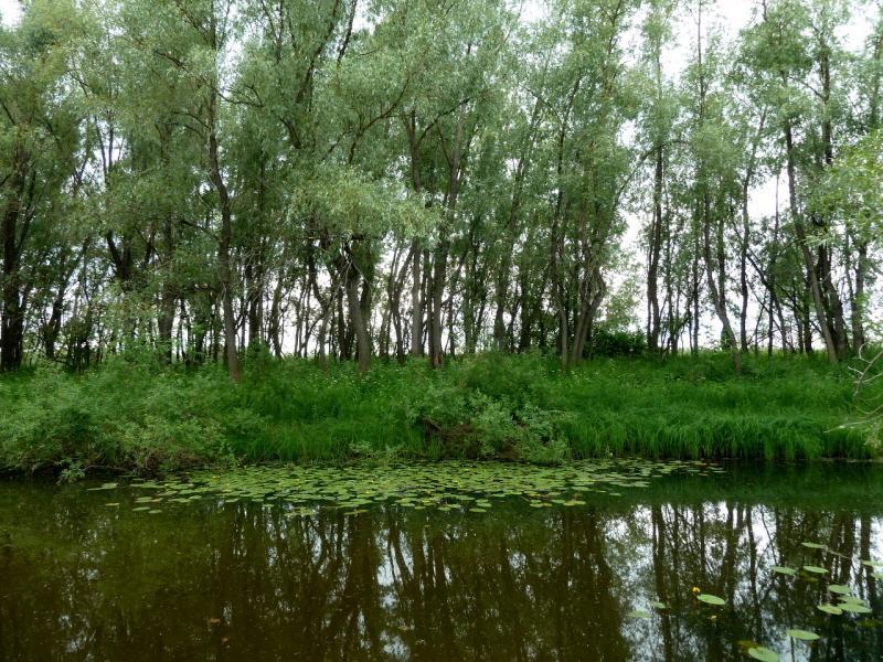 20130719. В пойме Иртыша у села Кенес. Протока.