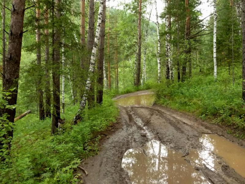 20200621. Красноярск. Лесная дорога вдоль речки Минжуль.