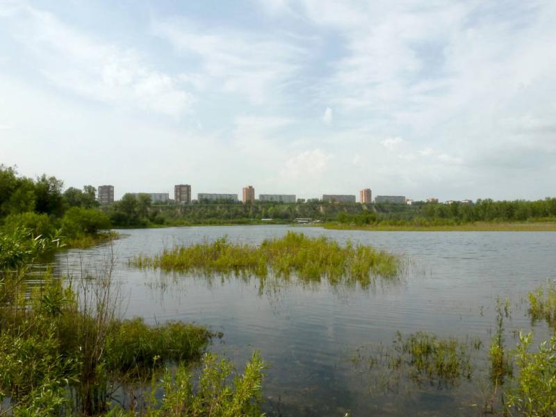 20200628. Красноярск. В затоне между островами Татышев и Сапожки, вид на микрорайон Зелёная роща, что на левом берегу Енисея.