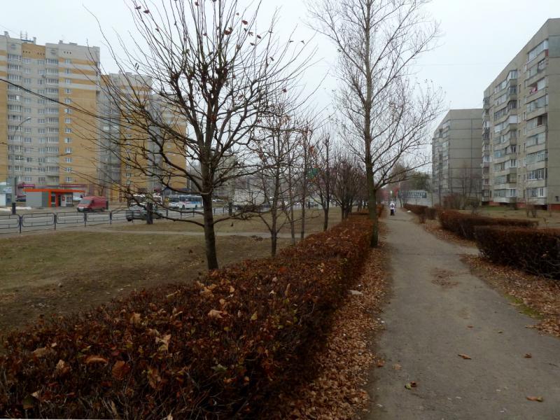 20141105. Тамбов. На улице Мичуринская, в районе пересечения с Магистральной.