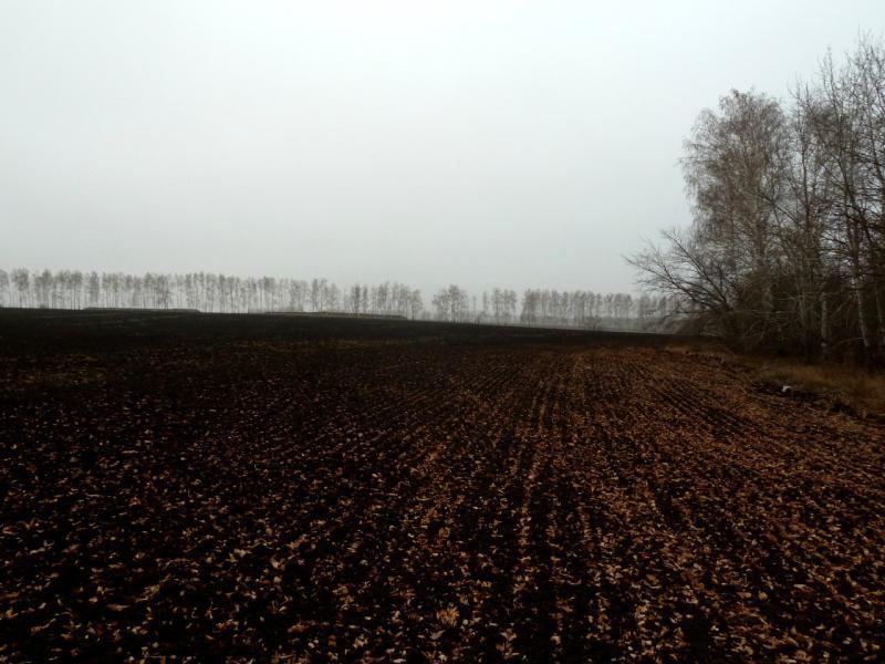 20141112. Тамбов. На краю распаханного участка черноземья размером два на пять километра.