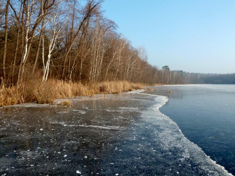 20141122. Тамбов в ноябре. Северный берег Чистоозёрного озера.