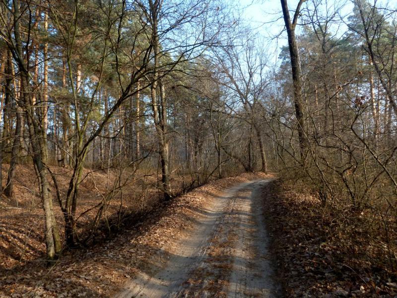 20141122. Тамбов в ноябре. Лесная дорога неподалеку от Чистоозёрного озера.