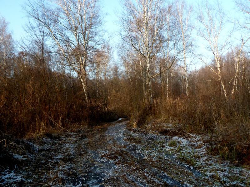 20141122. Тамбов в ноябре. Дорожки восточного леса.
