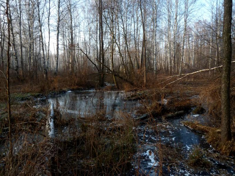 20141122. Тамбов в ноябре. Одна из многочисленных речек восточного леса.