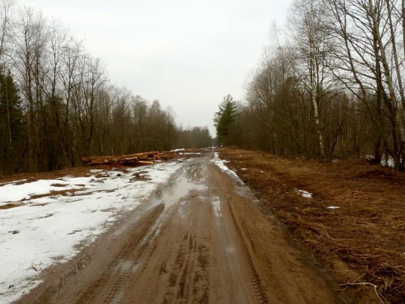 20150329. Лесная дорога под Загонным болотом, неподалеку от Сологубовки.