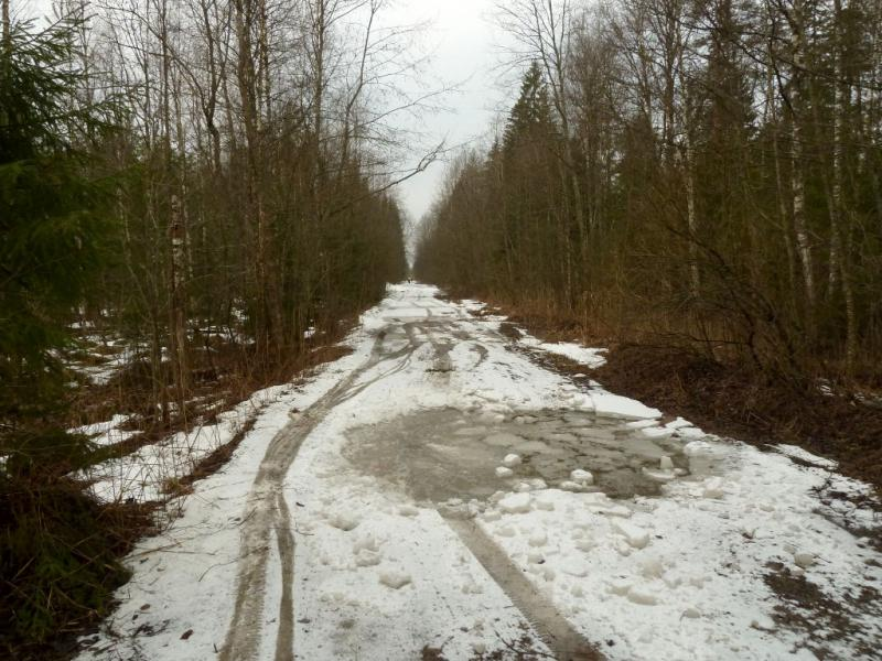 20150329. Подмёрзшие лужи на лесной дороге от Сологубовки до Нурмы.
