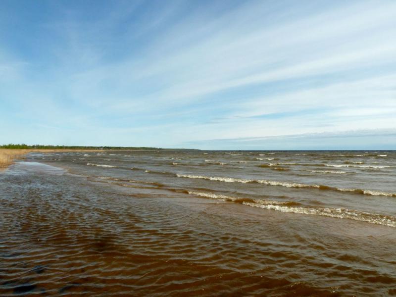 20160516. На западном берегу Ладожского озера.