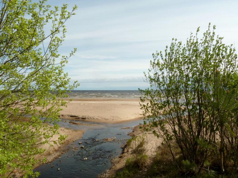 20160516. У ручья, стекающего в Ладожское озеро.