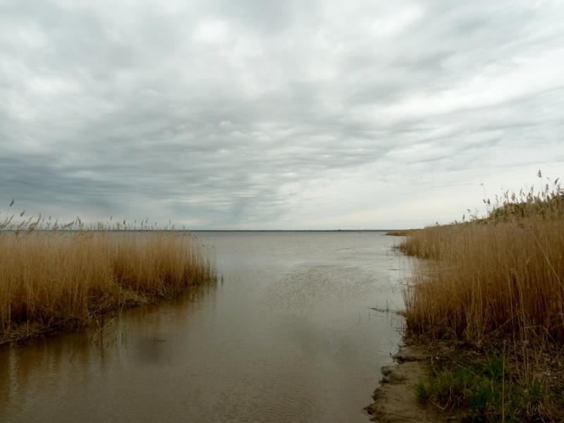 20160516. Вид на Ладожское озеро с берега у посёлка имени Морозова.
