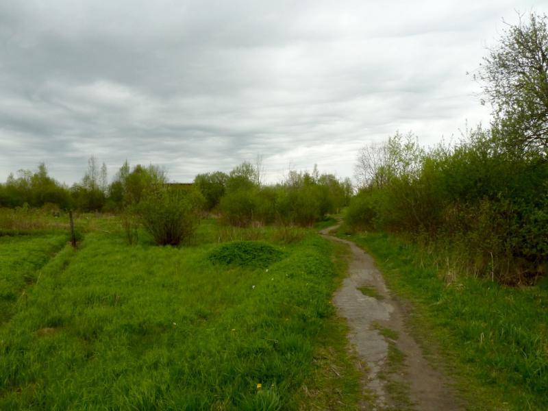 20160516. Тропинка вдоль берега Ладожского озера в районе посёлка имени Морозова.