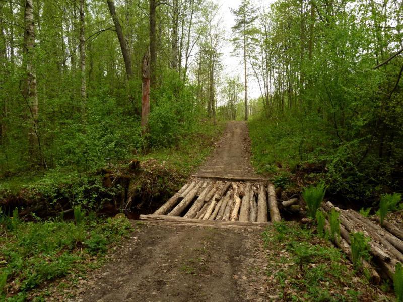 20160516. Мостик через ручей в лесах под селом Пески.
