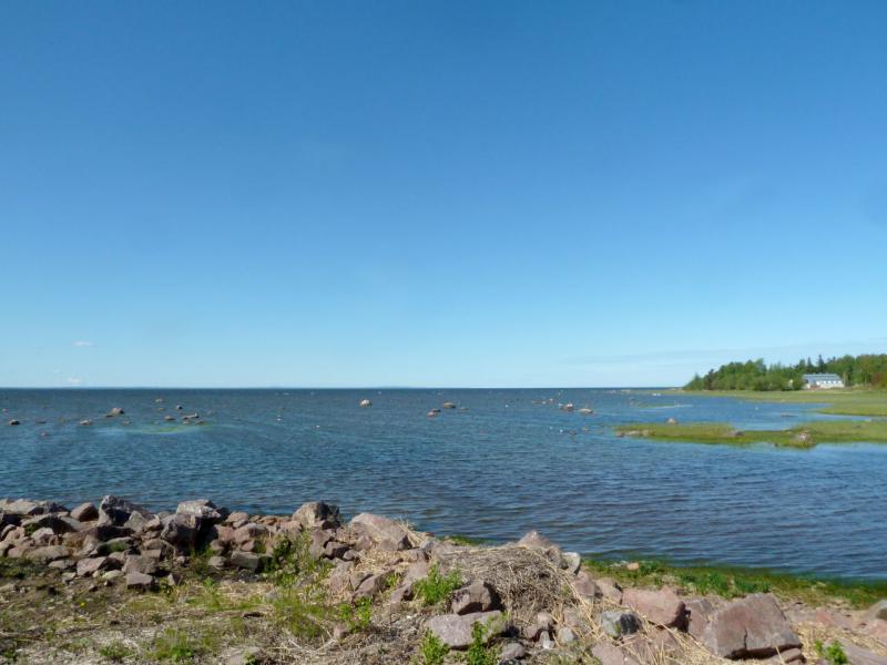 20150524. Вид на залив Копорская губа с одного из небольших мысов под городом Сосновый Бор.