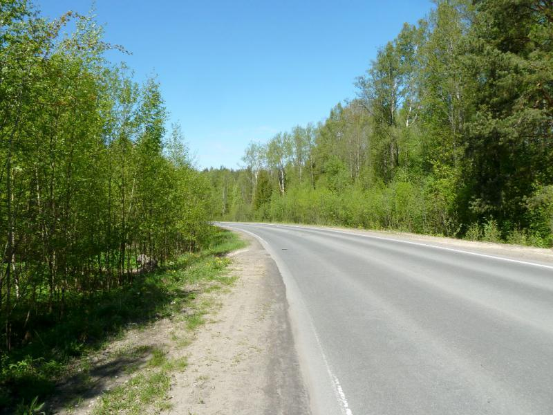 20150524. Шоссе в лесах на берегу Балтийского залива.