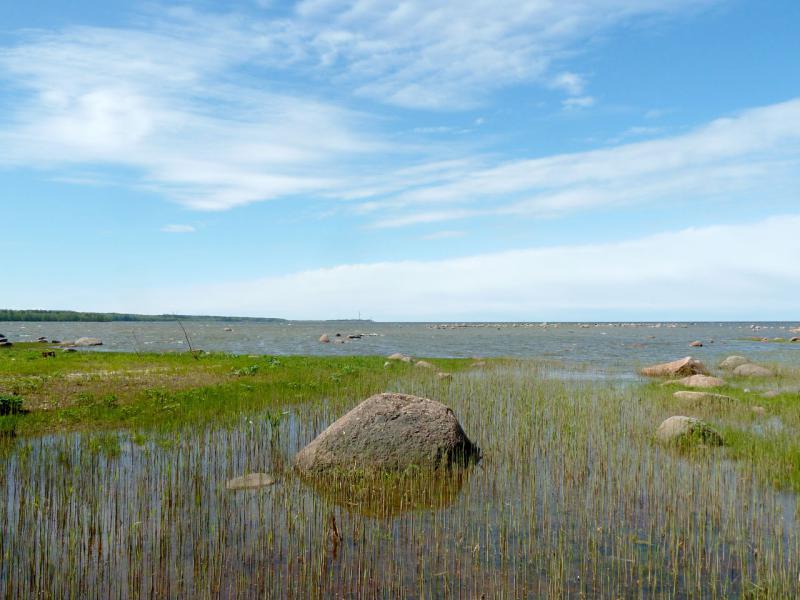 """20150524. Вид на побережье Балтийского залива в районе береговых укреплений форта """"Серая лошадь""""."""