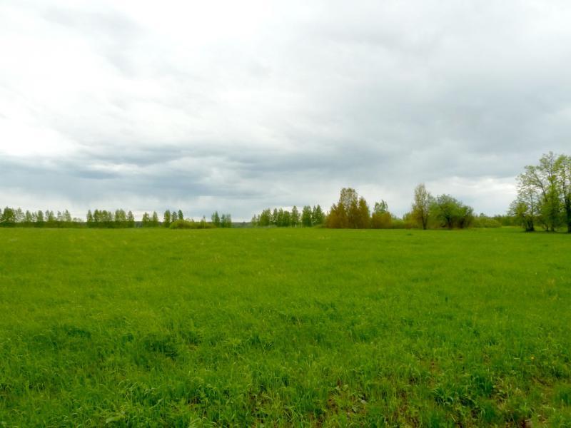 20150524. В лугах около посёлка Верхние Веники.