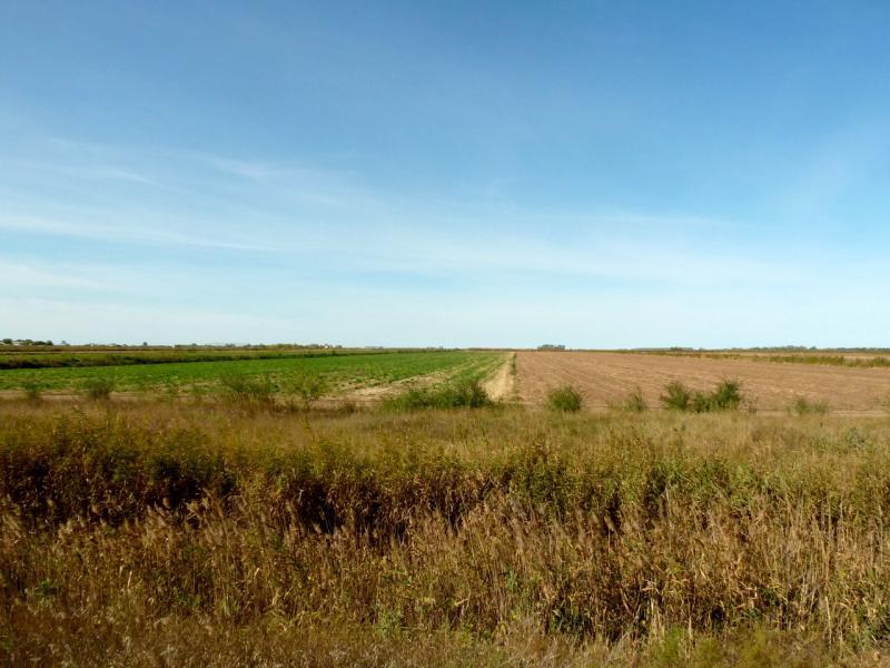 20150916. Вид на поля между каналом Иртыш-Караганда и селом Евгеньевка.