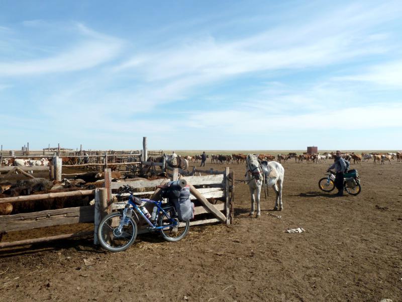 20150916. У загона для скота типичной летней стоянки животноводов северного Казахстана.