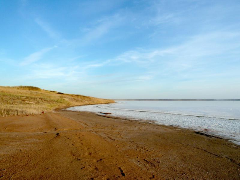20150916. Вид на берег горько-солёного озера Алтыбайсор.