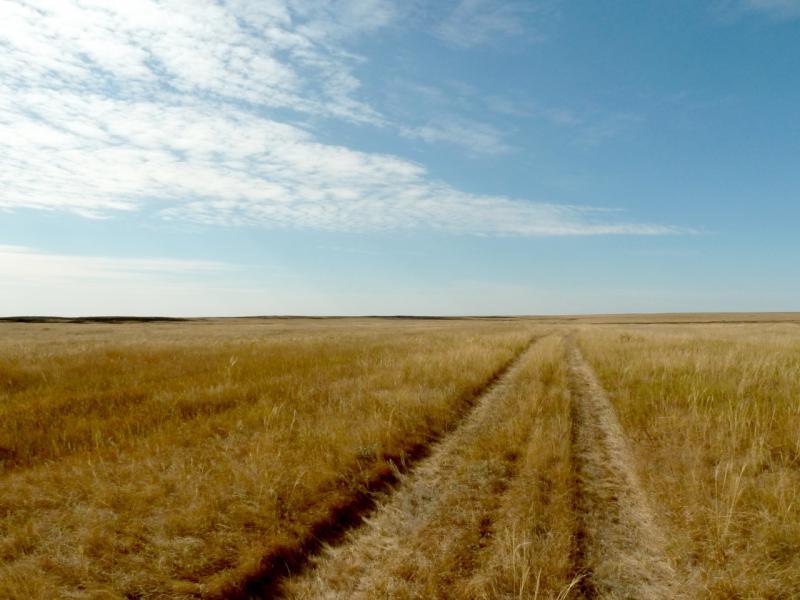 20150917. Степная дорога в слабо выраженных холмах северного края казахстанского мелкосопочника.