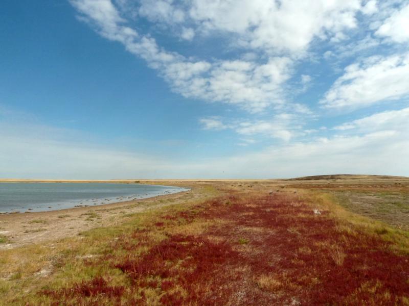 20150917. На берегу слабо-солёного озера Торыат.