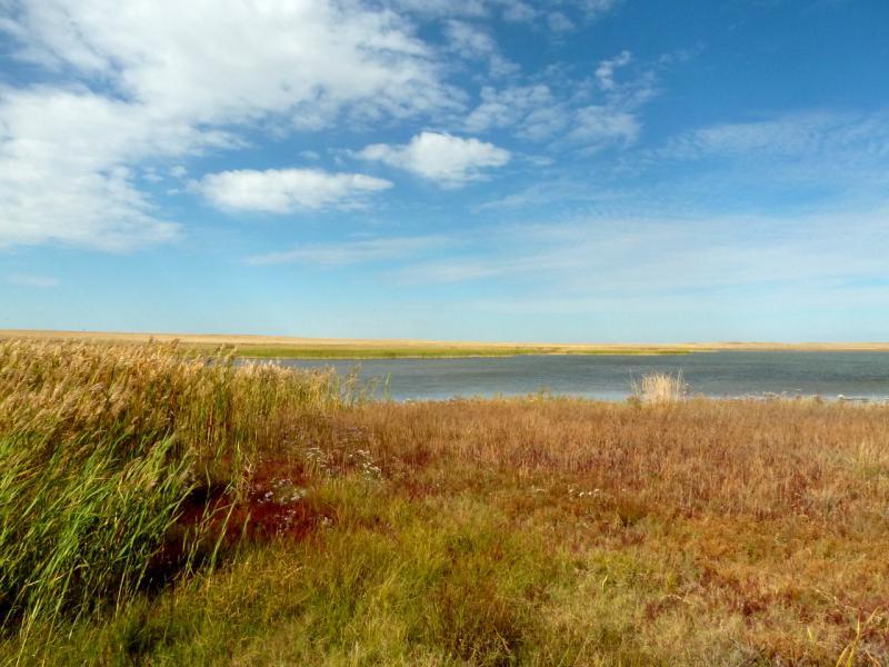 20150917. В месте подпора пресных грунтовых вод на берегу солёного озера Торыат.