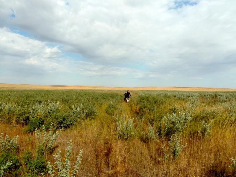 20150919. Заброшенной заросшей колючим кустарником дорогой в низине южнее солёного озера Еспетуз.