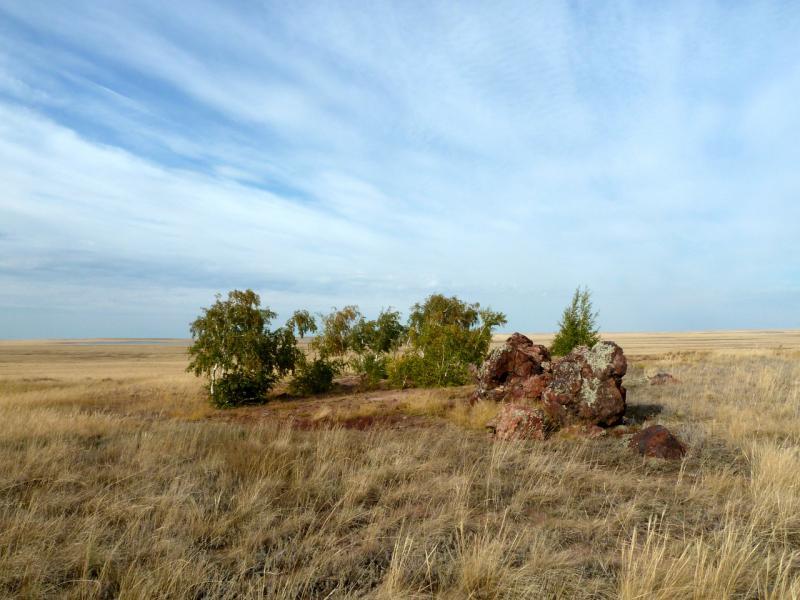 20150919. Непонятно откуда берущие воду кучки деревьев посреди просоленной степи.