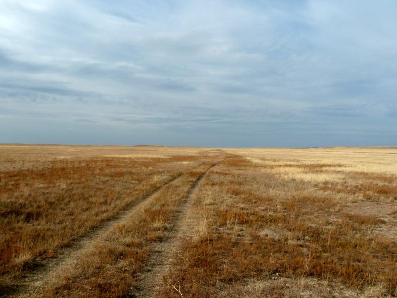 20150919. Степь и степь, кочки и скудная трава до горизонта.