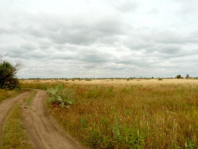 20150920. Обширная луговина между городом Аксу и каналом Иртыш-Караганда.