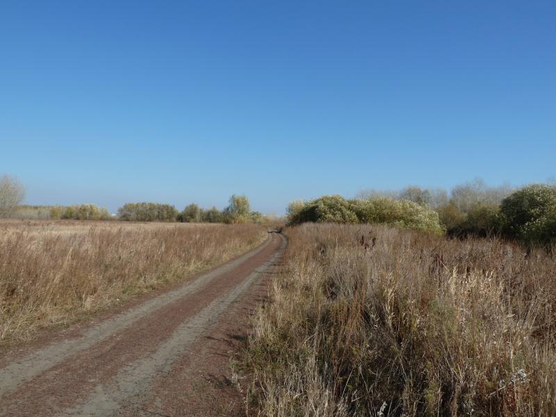 20100730. Дорога вдоль усольского затона, ведущая к звероферме на западной оконечности полуострова.