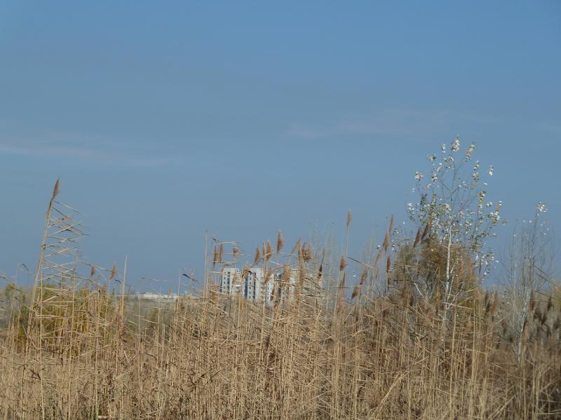 20100730. За травой и скрытым в её гуше руслом протоки Усолки виднеются многоэтажки усольского микрорайона.