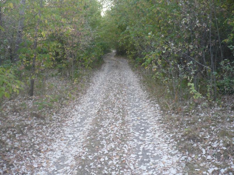 20100730. Дорога в зарослях на юго-западе усольского полуострова.